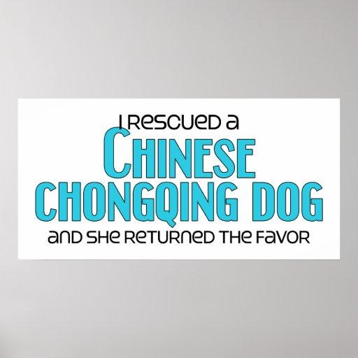 Rescaté un perro chino de Chongqing (el perro feme Póster