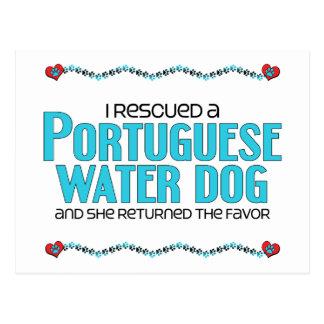 Rescaté un perro de agua portugués (el perro postal