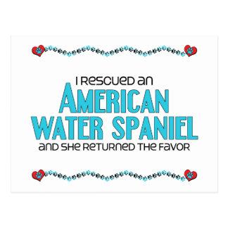 Rescaté un perro de aguas de agua americana (el tarjetas postales