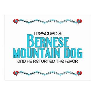 Rescaté un perro de montaña de Bernese (el perro Postal