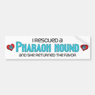 Rescaté un perro del Pharaoh (el perro femenino) Pegatina De Parachoque