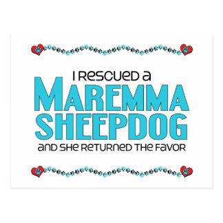 Rescaté un perro pastor de Maremma (el perro femen Tarjeta Postal