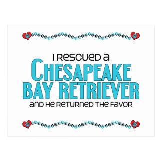Rescaté un perro perdiguero de bahía de Chesapeake Postal