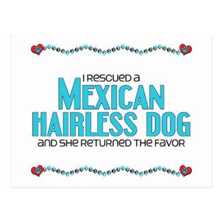 Rescaté un perro sin pelo mexicano (el perro tarjetas postales