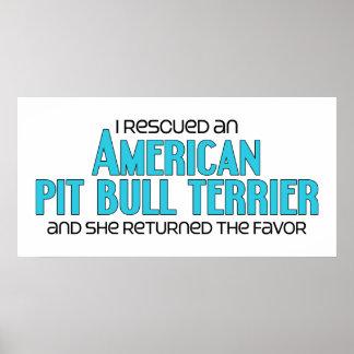 Rescaté un pitbull Terrier del americano (femenino Posters