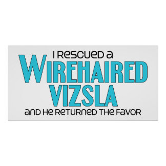 Rescaté un Vizsla Wirehaired (el perro masculino) Póster