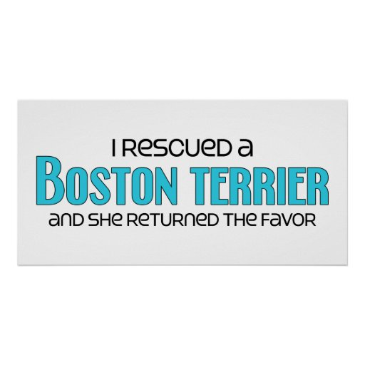 Rescaté una Boston Terrier (el perro femenino) Impresiones