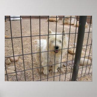 Rescáteme poster de Terrier blanco de montaña del