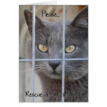 Rescue a Cat in need Greeting Card