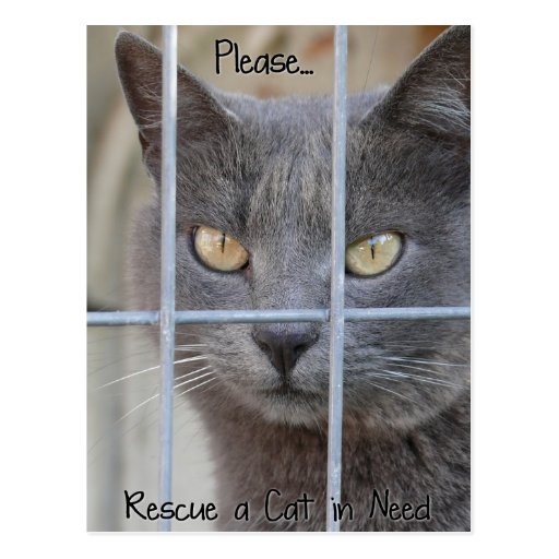 Rescue a Cat in need Post Card