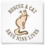 Rescue A Cat Save Nine Lives Art Photo