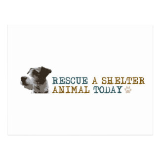 Rescue a Shelter Animal Today Postcard