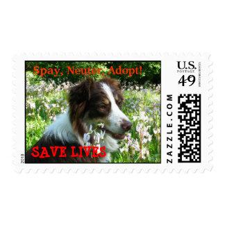 Rescue Australian Shepherd Spay Neuter Adopt Postage Stamp