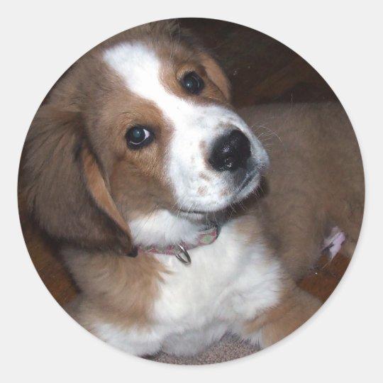 Rescue Dog Buddy Implores You Classic Round Sticker