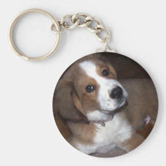 Rescue Dog Buddy Implores You Keychains