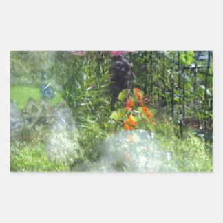 Rescue Dog Reflection Garden Havanese Rectangular Sticker