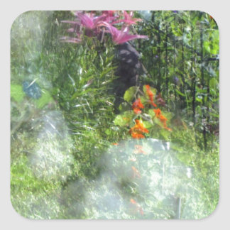 Rescue Dog Reflection Garden Havanese Square Sticker