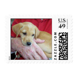 Rescue dogs postage stamps