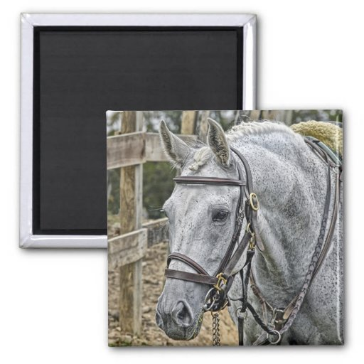 "Rescue Horse ""Ace""  Magnet"