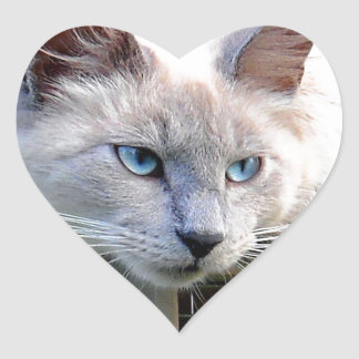 Rescue Me Ragdoll Cat Eyes Original Photograph Heart Sticker