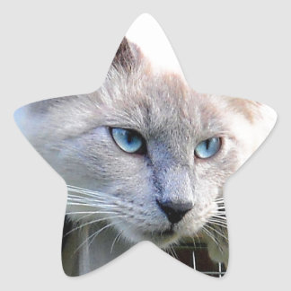 Rescue Me Ragdoll Cat Eyes Original Photograph Star Sticker