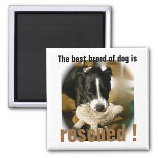 Rescue Pet Animals Magnet