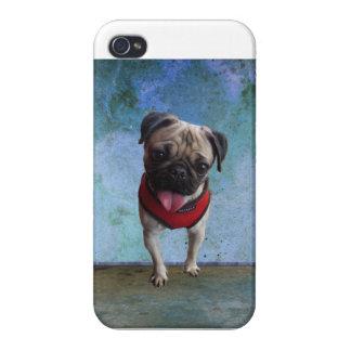 Rescue Pug Dog, Phoebe iPhone 4 Case