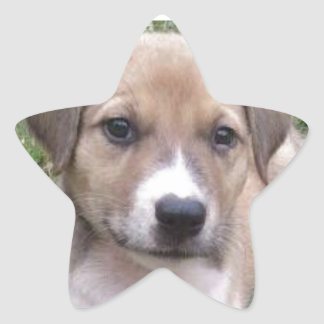 Rescue Pup Star Stickers