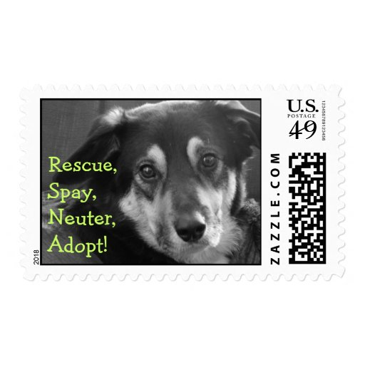 Rescue Spay Neuter Adopt Foster Save Lives Postage