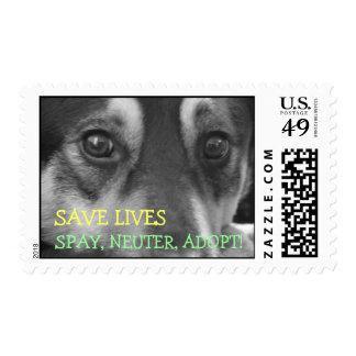 RESCUE, Spay, Neuter, Adopt Postage Stamp