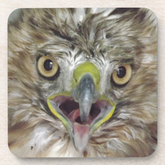 Rescued and Released Hawk Coasters