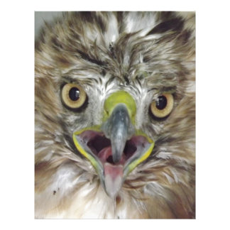 Rescued and Released Hawk Letterhead