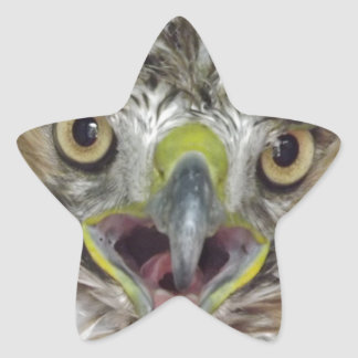 Rescued and Released Hawk Star Sticker