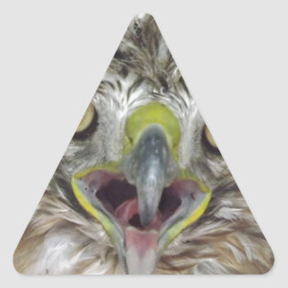 Rescued and Released Hawk Triangle Sticker