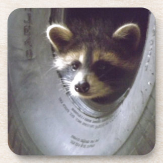 rescued and released raccoon coaster