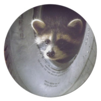 rescued and released raccoon melamine plate