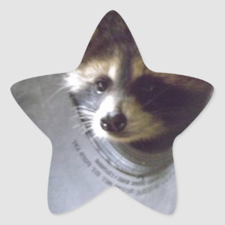 rescued and released raccoon star sticker