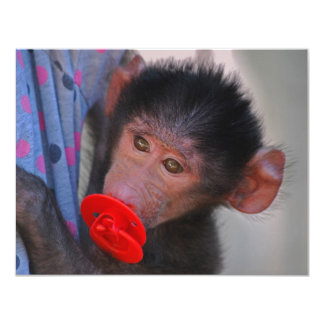 Rescued Baby Ape with a dummy Card