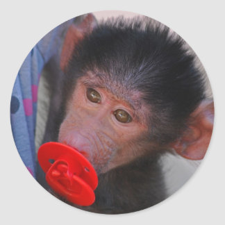 Rescued Baby Ape with a dummy Classic Round Sticker