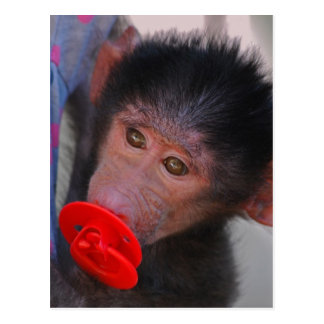 Rescued Baby Ape with a dummy Postcard