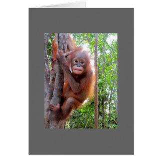 Rescued Baby Orangutan Uttuh Card