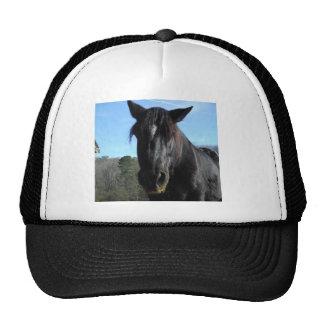Rescued Black Draft Horse Trucker Hat