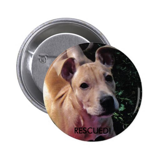 RESCUED! dog button
