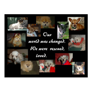 Rescued Dogs Postcard