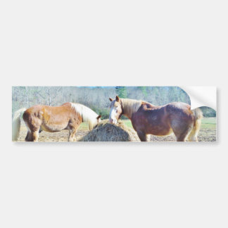 Rescued Draft Horses eating hay Bumper Sticker