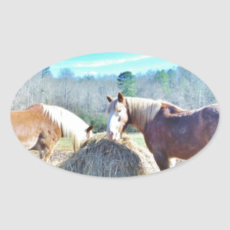 Rescued Draft Horses eating hay Oval Sticker