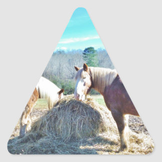 Rescued Draft Horses eating hay Triangle Sticker