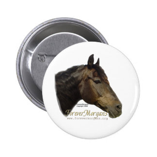 Rescued ForeverMorgan  Horse Apollo Button