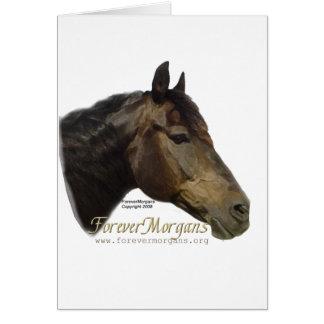 Rescued ForeverMorgan  Horse Apollo Card