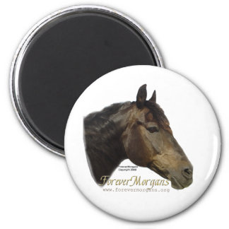 Rescued ForeverMorgan  Horse Apollo Magnet